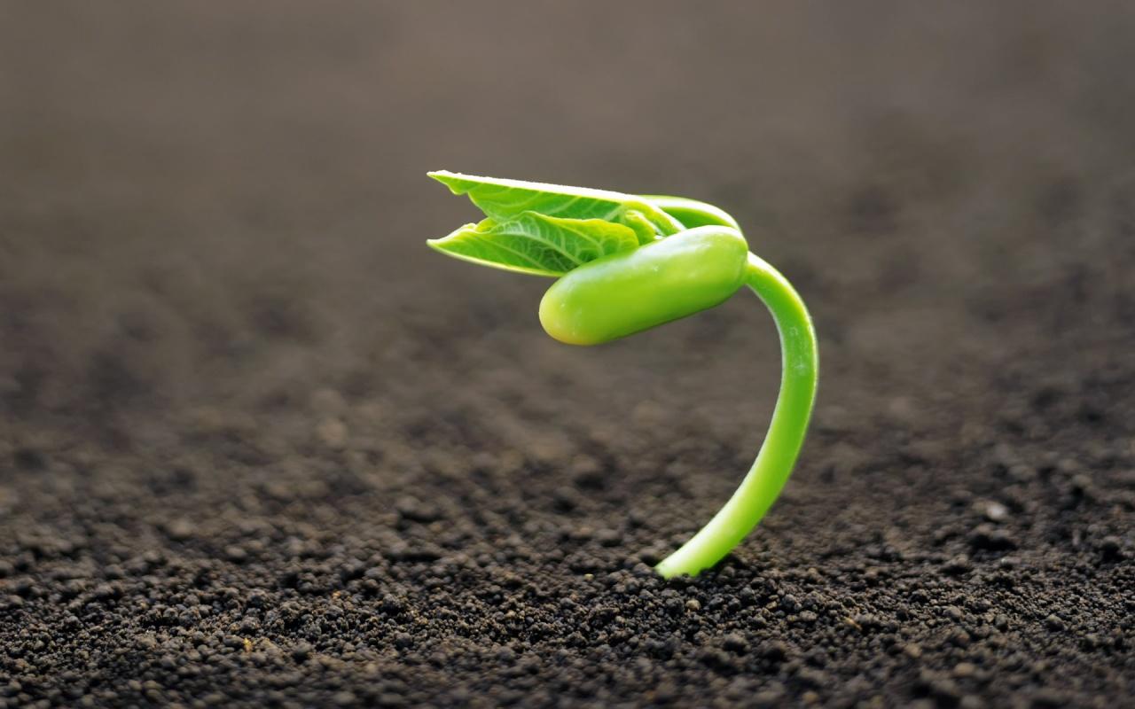 planta_saliendo_de_una_semilla-1280x800
